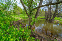 Spring Photography: Beavers We...