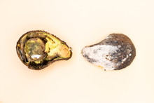 Rotten Avocado Split In Half With Mold Where The Inner And Outer Part Is Seen On A Pale Yellow Background