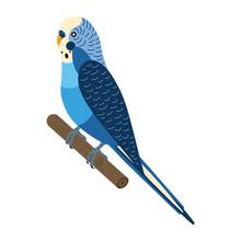 Budgerigar Parakeet Parrot Or ...