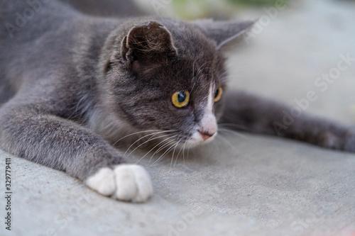 cute cat close shot closeup