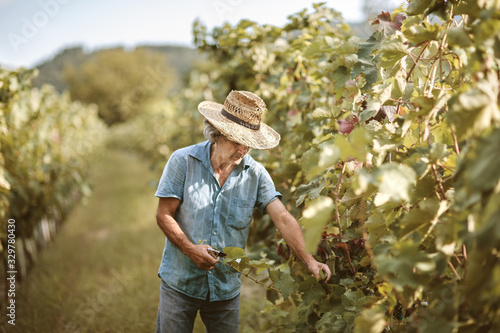 Fotografía Senior male with hat working in vineyard