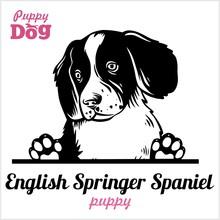 Puppy English Springer Spaniel...