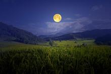 Romantic Full Moon Over Rice F...