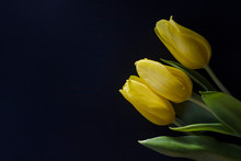 Three Yellow Tulips Top View O...