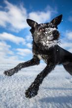 Hilarious Black Dog Jumping Fo...