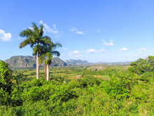 Amazing Green Nature Valley With Trees In The Background In Cuba