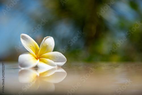 Exotic white frangipani flower on the dark grey stone Canvas Print