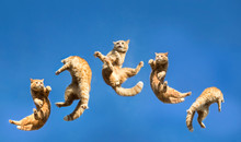 Jumping Cat Shot On Clear Sky