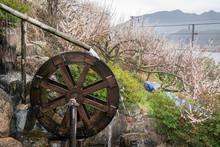 Korea's Traditional Waterwheel And Plum Blossom