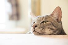 頭を乗せる猫