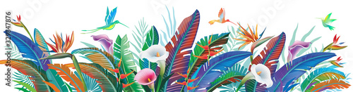 Obraz Tropical jungle plants, flower and hummingbirds, vector illustration - fototapety do salonu