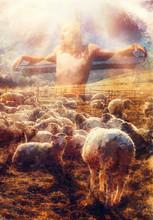 Jesus The Good Shepherd, Jesus And Lambs.