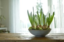 Spring Still Life With Daffodi...