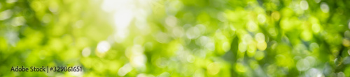 Fototapeta Abstract blurred out of focus and blurred green leaf background under sunlight with bokeh and copy space using as background natural plants landscape, ecology cover concept. obraz