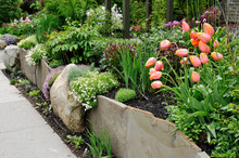 Beautiful Stone Wall, Retaining Garden With Tulips And Flox