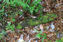 Tronco Verde De Bosque