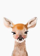 Baby Deer Print • Woodland A...