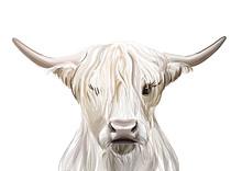 Highland Cow Print • PRINTAB..
