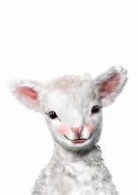 Lamb Nursery Print • Baby Fa...
