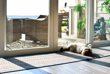 A Gray And White Tabby Cat Lounges On His Back In The Sun In Front Of A Sliding Glass Door.