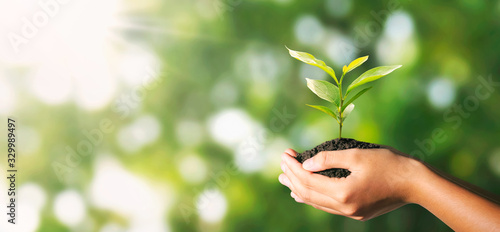 Obraz plant growing in hand on green nature with sunlight background. eco environment concept - fototapety do salonu