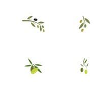 Olive Set Logo Template Vector...