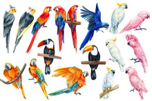 Watercolor Parrots, Tropical B...
