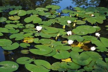 cvijeće na lopočima i zeleno lišće okrugli pogled