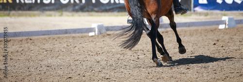 Fototapeta Dressage horse in close-up of legs trotting in dressage arena.. obraz