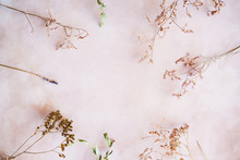 Twigs Of Dried Flowers And Her...