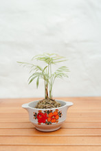Kokedama Japanese Moss Ball Indoor Hanging Plants In Vintage Bowls Upcycling