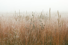 Landscape Of Frosted, Autumn Tall Grass Prairie In Fog, Fort Custer State Park, Michigan, USA