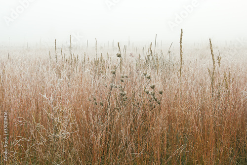 Papel de parede Landscape of frosted, autumn tall grass prairie in fog, Fort Custer State Park,
