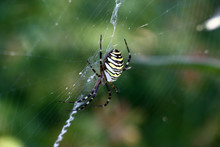 On A Web, Original In A Form, ...