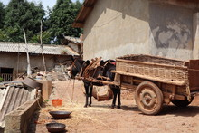 Man With His Donkey In Small Chinese Village. Poverty In The Chinese Countryside
