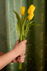 Bouquet of yellow tulips in a female hand on a background of green curtains. Old woman with flowers, vertical photo, holiday concept.