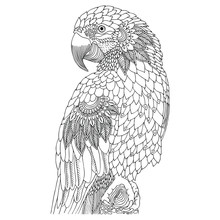 Macaw. Hand Drawn Parrot. Sketch For Anti-stress Adult Coloring Book In Zen-tangle Style. Vector Illustration For Coloring Page, Isolated On White Background. Template For Poster, T-shirt Or Tattoo.