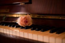 Beautiful Rose On Piano Keys