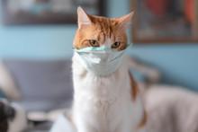 Gato Doméstico Lleva Una M&a
