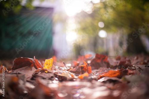 Fototapeta Herbst1