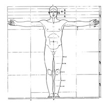 Proportions Of Human Figure, V...