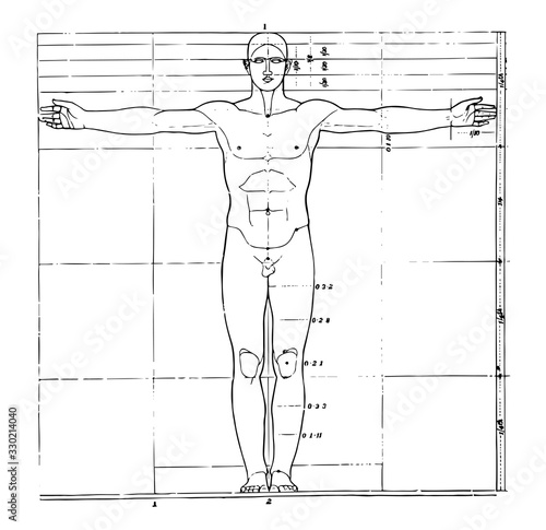 Photo Proportions of human figure, vintage illustration