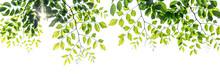 Twigs With Beautiful Green Lea...