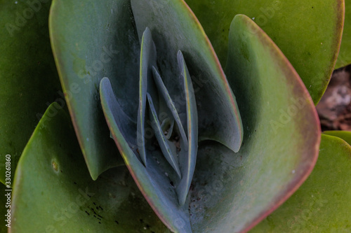 close up plant picture with folded leafs Slika na platnu