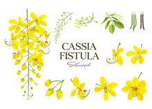 Cassia Fistula Flower, National Flower Of Thailand, Beautiful Yellow Collections On White Background, Vector Illustration