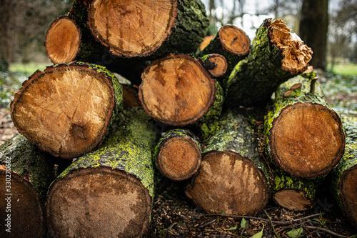 Photo Holz am Wegrand