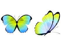 Tropical Colorful Butterfly Is...