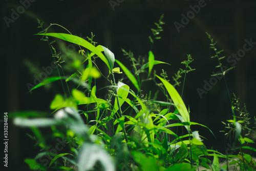 фотография Green wild grass plant under sunlight with dark background