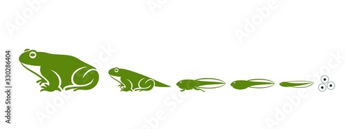 Stages of frogs life cycle. Abstract frog on white background. Tableau sur Toile