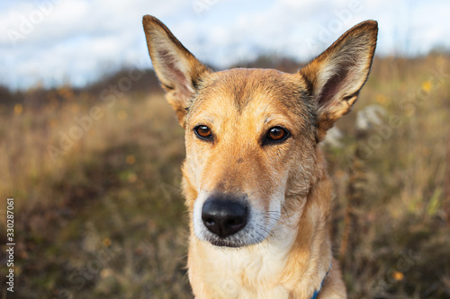 Leinwand Poster Confident mongrel dog sitting in countryside at nature